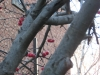 Tree and berries