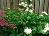 peonies-and-clematis