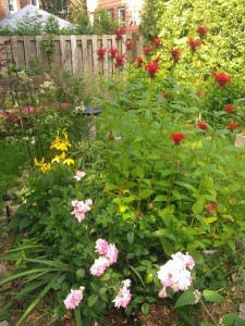 Bee balm, lilies, roses, etc