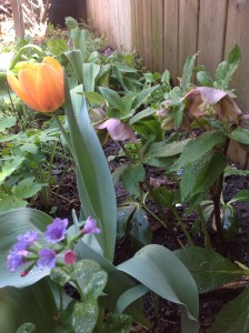 A corner of my garden dedicated to spring flowers