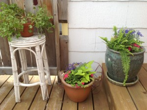 I put together small caladiums, ferns, lobelia and potato vines for the two on the right.  The left is a geranium I had inside all winter.