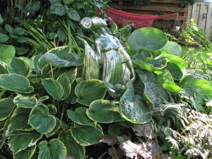 Green Lady and Hosta