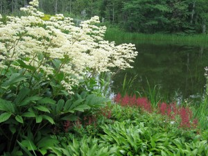 White astilbe by a pond