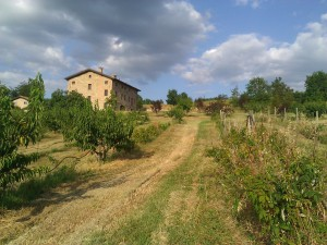 This is the house at Podere Prasiano, taken from a distance, through the orchard.