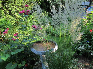 The bird bath with grass fronds waving.